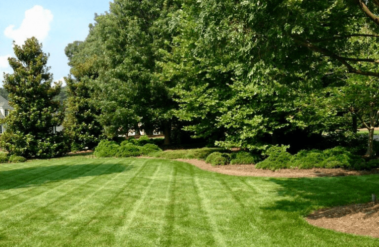 Lawn Care Tips for Each Season for Your Yard